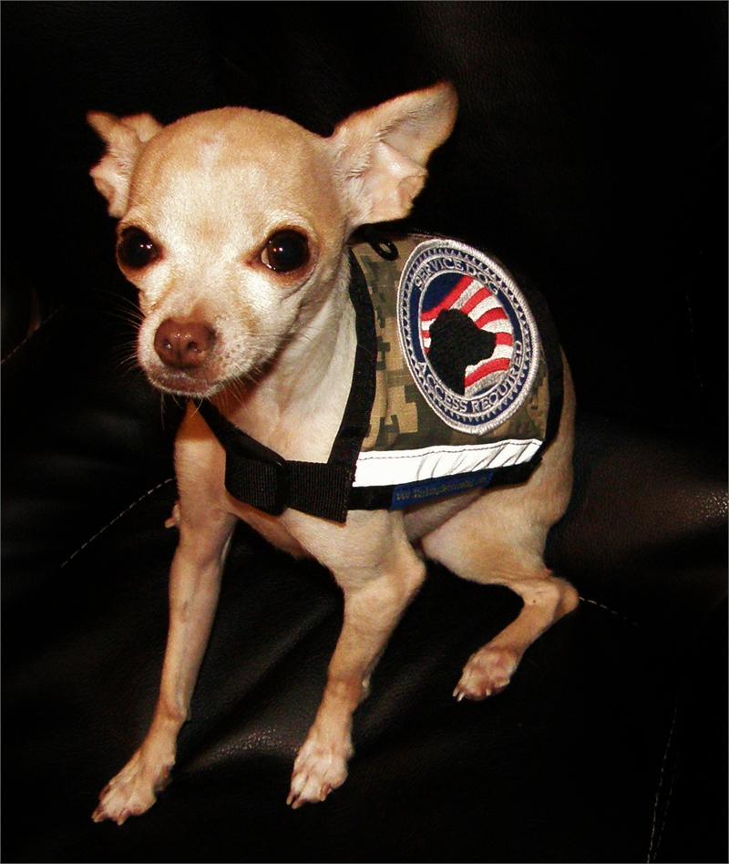 Xx Small And X Small Camo Service Dog Vest