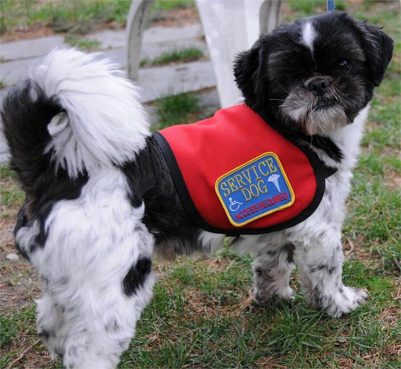 Small Service Dog Vest Official Vest For Small Dogs