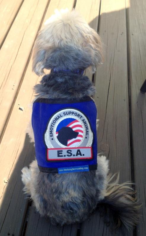 Premium Emotional Support Dog Vest For Smaller Dogs