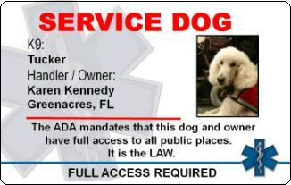 How To Register A Service Dog With The Ada
