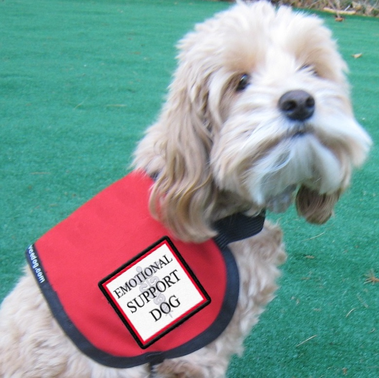 dog tag patches emotional support dog vest complete with 2 patches for small dogs