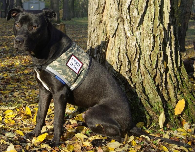 Dog Vest With Pockets Dog Vest Zipper Pocket