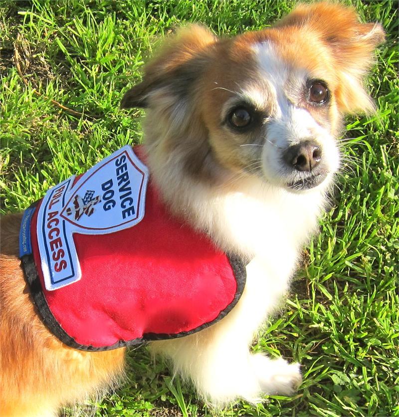 Design Your Own Service Dog Vest