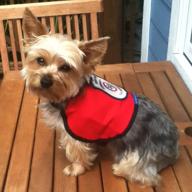 Therapy Dog Vests For Sale