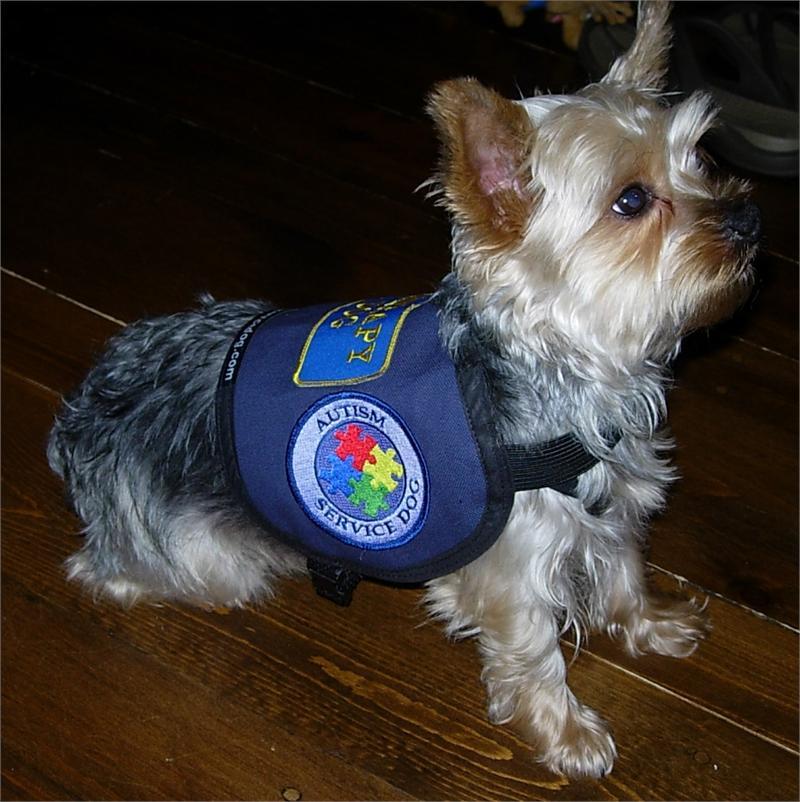 Service Dog Vests And Patches Service Dog Vest Complete