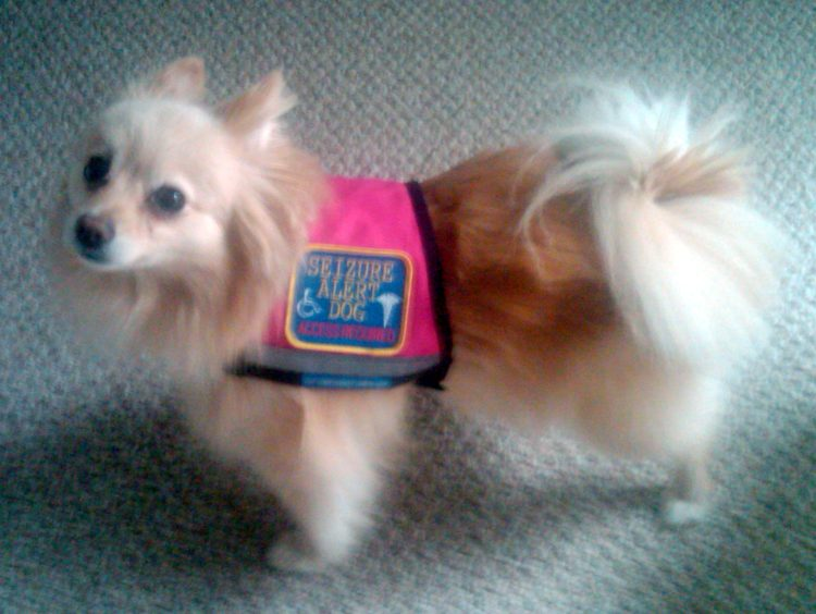 Xx Small And X Small Reflective Service Dog Vest With