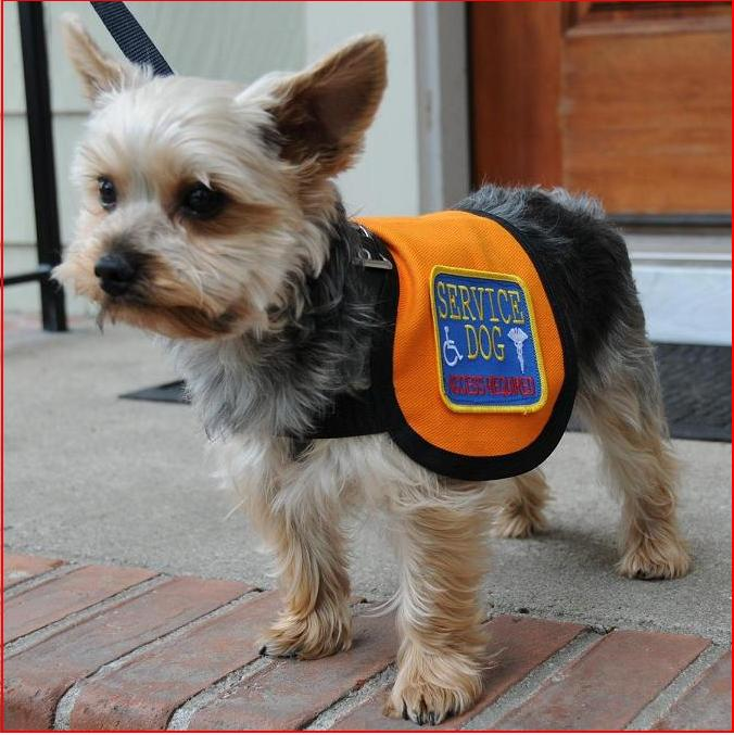 Service Animal Vest For Small Dog