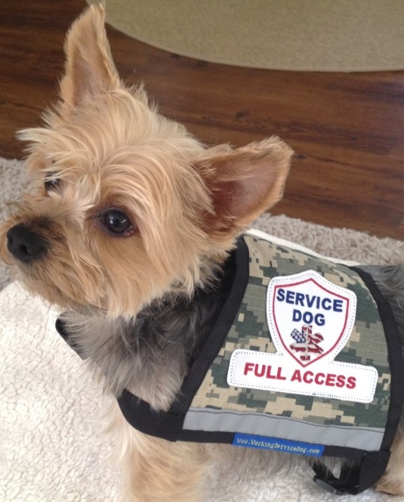 Dog Vest With Pockets Premium Small Service Dog Vest