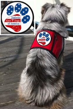 Working Service Dog Diabetic Alert Dog Of America Vest