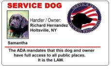 service dog id cards to help you travel with your. Black Bedroom Furniture Sets. Home Design Ideas