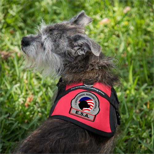 Registered Emotional Support Dog Vest Kits | ESA Kits for Dogs
