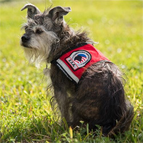 emotional support dog vests for small dogs