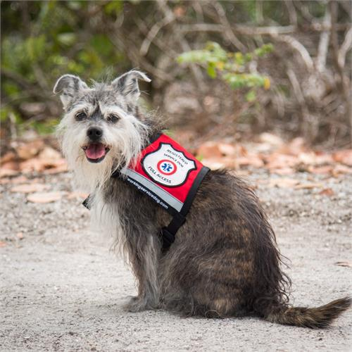 Small Service Dog Vests