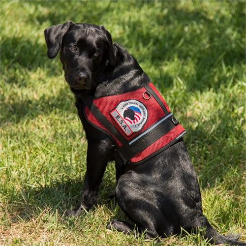 emotional support dog vest for large dogs