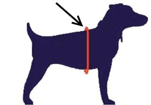 how to measure your dogs girth