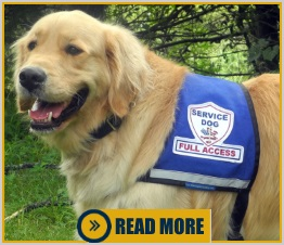 Do Service Dogs have to wear a vest