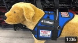 Identify your Service Dog In Training