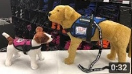 Introducing Chip and Dale working service dog