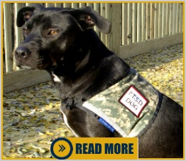patriotic service dog vests and accessories