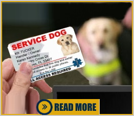 Service Dog Identification Is Not Required