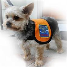 Service dog full access vest on a small dog