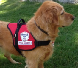 Service Dog Vest All Size Service Vests Harnesses Patches