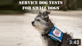 service dog vests for small dogs