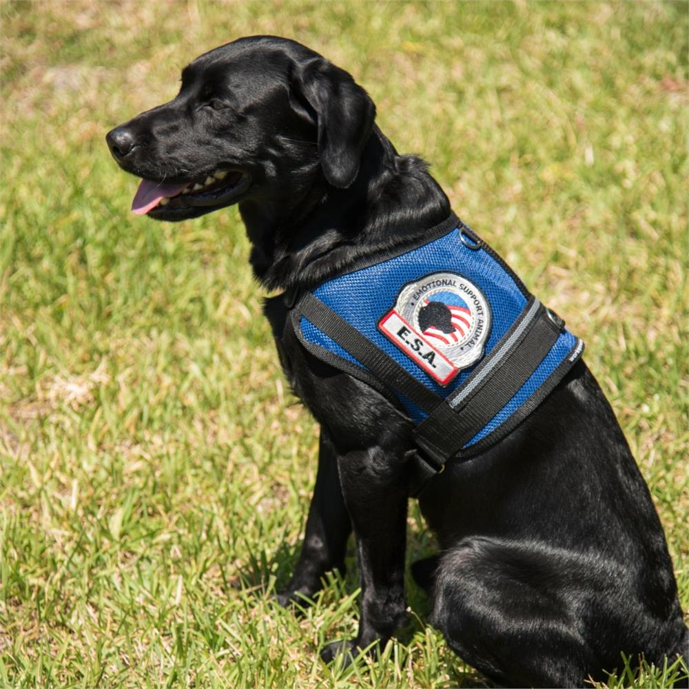 Premium Mesh Emotional Support Dog Vest