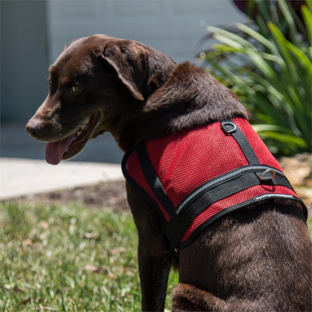 Mesh Emotional Support Dog Vest