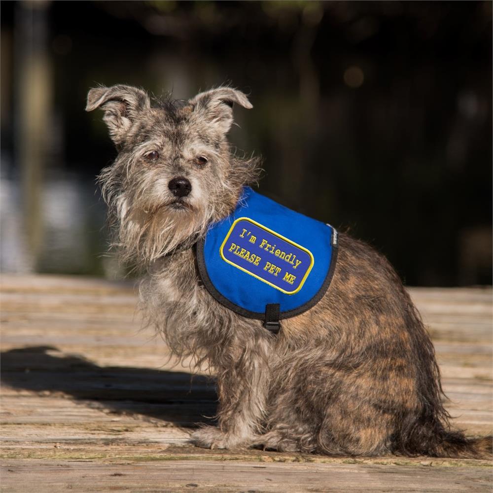 Dog Clothing Shoes Service Dog Vest Patch Therapy Dog Please Pet Me Vest Patch Pet Supplies