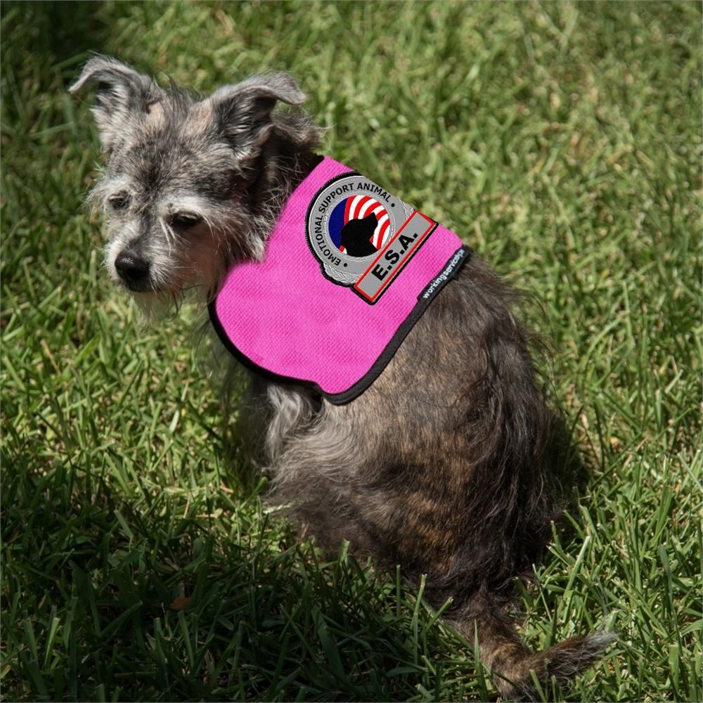Emotional Support Dog Vest Small