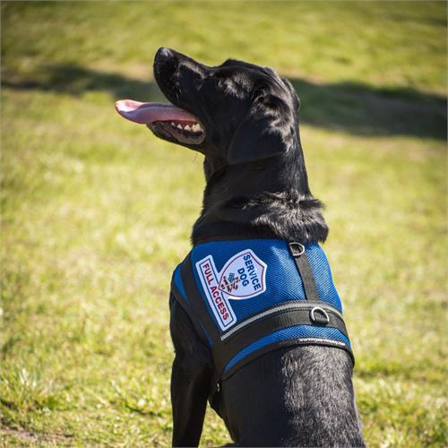 Mesh Service Dog Vests