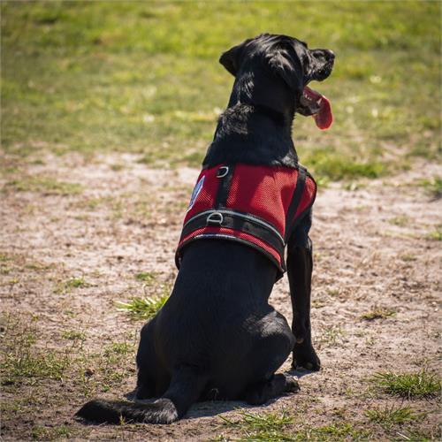 Mesh Service Dog Vest