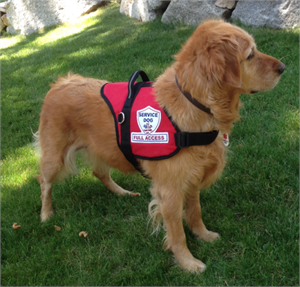 """Full Access Service Dog Vest"