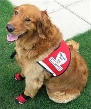 Full Access Service Dog Vest