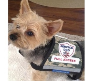Camouflage Small Service Dog Vest