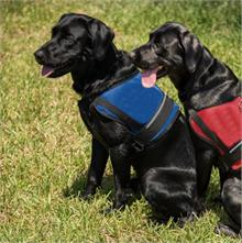 Official Mesh Service Dog Vest